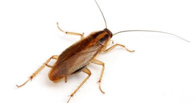 как бороться с тараканами эффективные способы