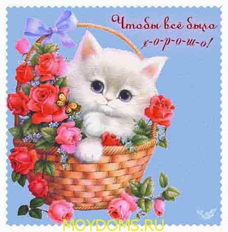 красивые открытки с котятами