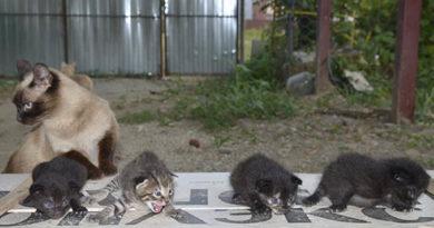 сбалансированное питание кошек