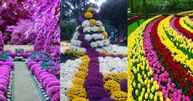Принципы цветочного оформления клумб, 6 типов цветников