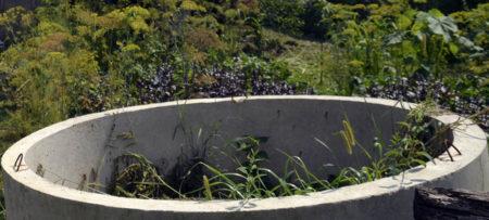подкормка из сорных трав