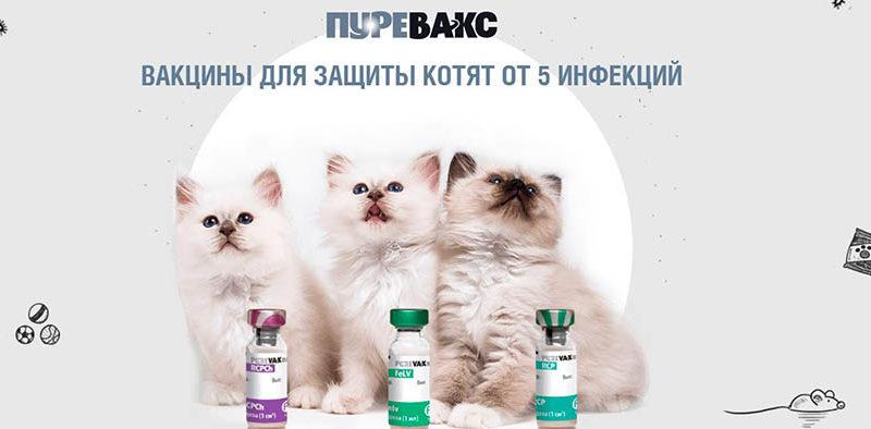 лечение котят пуреваксом вакцинация
