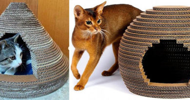 круглые домики из картона коту